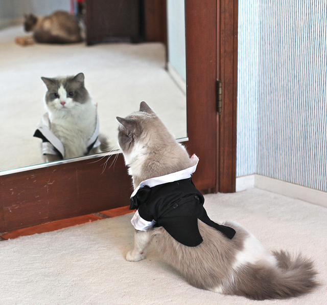 Things to Consider Before Including Your Pet in Your Wedding